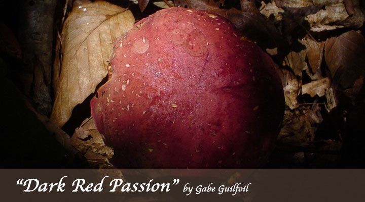 Dark Red Passion by Gabe Guilfoil